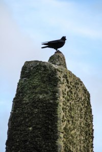 raven at stonehenge