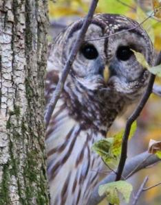 owl444