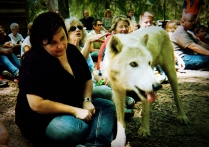 wolf 15