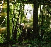 wolf 25