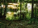 wolf 26