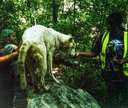 wolf 29