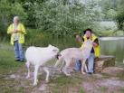 wolf 41