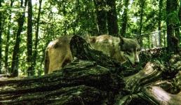 wolf 49