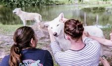 wolf 53