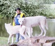 wolf 56